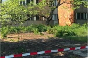 bäume statt wohnungen: anwohner und howoge kämpfen um karlshorster waldstück