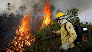 Brasilien: Vernichtung des Regenwaldes verdoppelt sich
