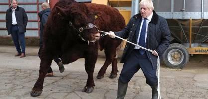 boris johnson will den britischen bullen entfesseln