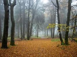 winterreifen-zeit beginnt: nebel, schauer, sonne