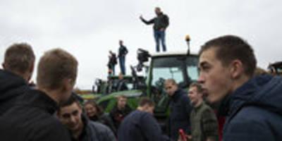 Umweltschutzpläne in den Niederlanden: Der Zorn der Bauern