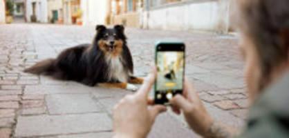 tipps: so machst du das perfekte hundebild mit dem iphone