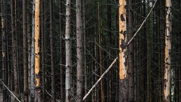 borkenkäfer,  dürre und stürme: 50 millionen-schaden