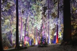 Weihnachtszauber: So schön wird der Tierpark bald leuchten