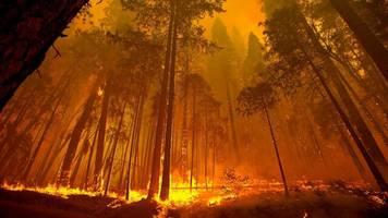 Stromversorger: Waldbrandgefahr führt in Kalifornien noch jahrelang zu Stromausfällen