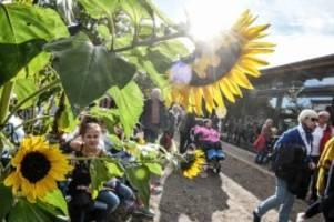 Imkertag: Wie Kindern die Angst vor Bienen genommen werden soll