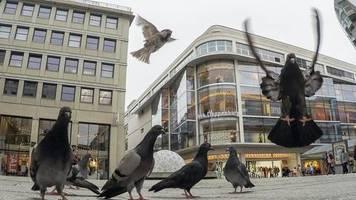 Standorttreue Tiere: Stuttgarter Fraktion fordert kontrollierte Futterplätze für Tauben in der Stadt