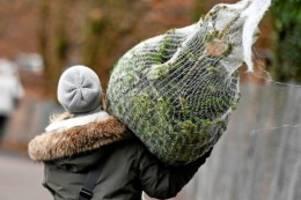 Umweltschutz: Weihnachtsbaum in Zeiten der Klimakrise? Das raten Experten