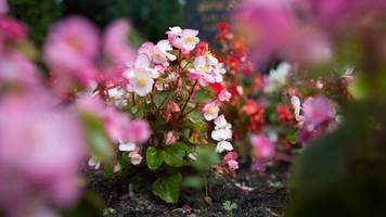 tipps für jede saison: pflegeleichte bepflanzung fürs grab