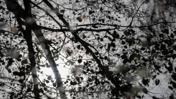 nachts nebel,  tagsüber sonne: woche bringt mildes wetter