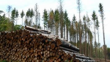forschergruppe mit kritik: studie zu aufforstung gegen klimawandel angezweifelt