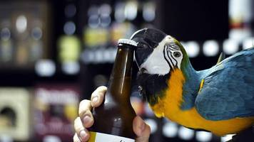 zagreb: flaschenöffnender papagei entflogen