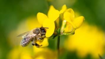 gesetz zum artenschutz: regierung will eckpunkte beschließen