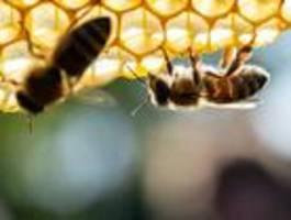 """EU gibt keine neue Genehmigung für """"Bienen-Killer"""""""