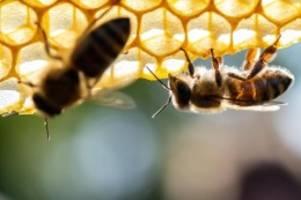 tiere: honigernte in brandenburg geringer als sonst
