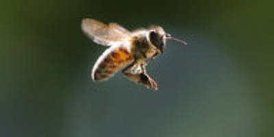 eu gegen insektengift: aus für thiacloprid