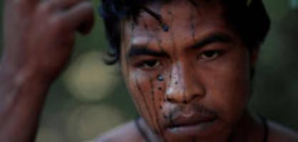 Holzfäller in Brasilien: Indigener «Wächter des Waldes» getötet