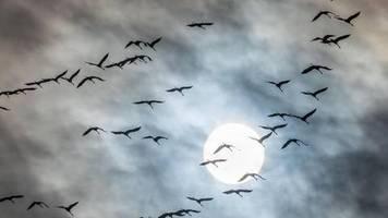 Ornithologie-Experten: Zug von Vögeln kann mit Klimawandel zum Nachteil werden