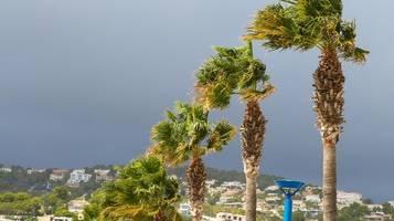Sturm auf Mallorca: Umstürzende Palme erschlägt Frau