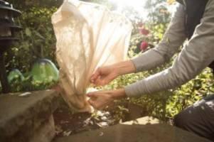 profi-tipps: winterschutz für pflanzen bewahrt vor frost und sonnenwärme