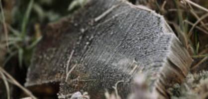 Eiskalt : Frostiges Erwachen bei -4,5 Grad im Flachland