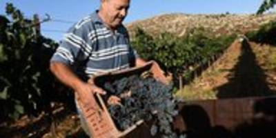 Von Israel besetzte Gebiete: Siedlerprodukte brauchen Etikett