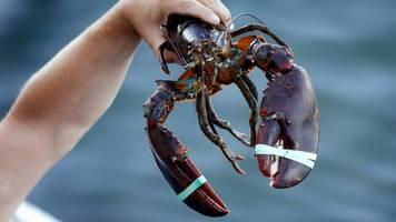 """WTO-Regeln: """"Lobster"""" bleibt teuer: EU senkt Zölle auf bestimmte US-Waren vorerst nicht"""