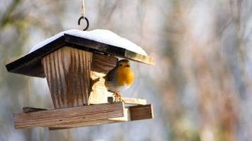 der natur ganz nah: wildvögel füttern und beobachten: das müssen sie über die winterfütterung wissen