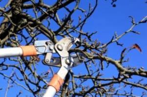 Gartenpflege: Starker Schnitt von Gehölzen bis Winterende erlaubt