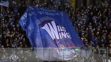 Wild Wings stellen Stürmer MacQueen frei: Ex-NHL-Profi kommt