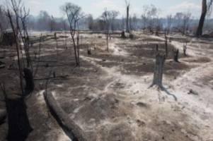 forscher warnen: brandstifter in bolivien gefährden einzigartiges Ökosystem