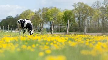 Mehr Äcker in Sachsen-Anhalt ökologisch bewirtschaftet