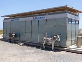 Klimaneutral nach Madrid: Greta kriegt Angebot für Weiterreise mit Esel