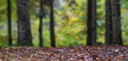 Kirchberg SG: Passanten finden Leiche im Wald