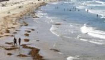 Klimawandel: Den Ozeanen geht der Sauerstoff aus