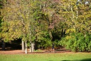 haushalt: koalition gibt mehr geld für pflege von parks und bäumen