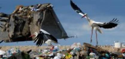zoo basel storch: «grüsel» lenny snackt den ganzen winter lang abfall