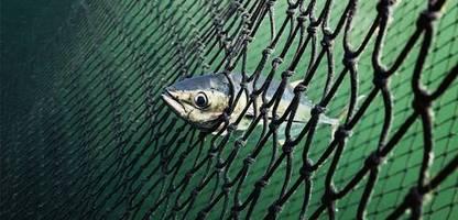 york hovest: bildband über bedrohte meere und ihre retter