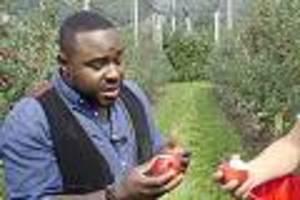 """tv-kolumne """"nelson müllers lebensmittelreport"""" - Äpfel ohne vitamin c – und deutsche erdbeeren mit migrationshintergrund"""