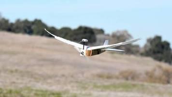 «PigeonBot»: Roboter mit echten Taubenfedern kann fliegen
