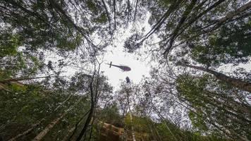 feuer in australien: lang ersehnter regen bringt erleichterung