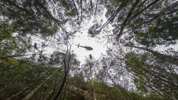 Regen hilft etwas - Brände in Australien: Tiere in Gefahr,  Urzeit-Bäume gerettet