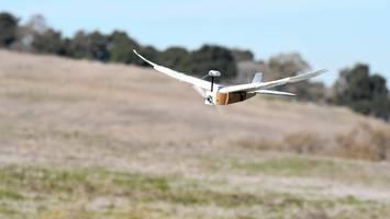 PigeonBot: Roboter mit echten Taubenfedern kann fliegen