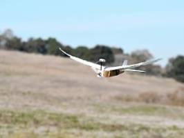 bei den tauben abgeschaut: roboter fliegt mit echten federn