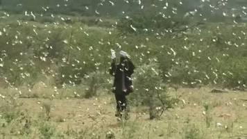 Video: Heuschreckenplage im Osten Afrikas