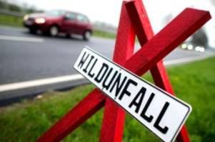 Unfälle: Rund 16 000 Wildunfälle im Norden im vergangenen Jahr