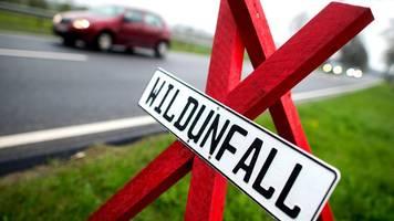 Rund 16 000 Wildunfälle im Norden im vergangenen Jahr