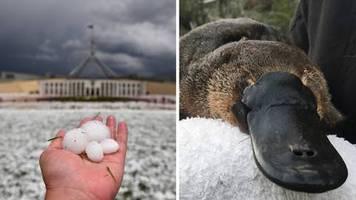 Staubstürme und Hagel: Katastrophenwetter und vom Aussterben bedrohte Tiere: Australien kommt nicht zur Ruhe