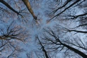 dokumentarfilm: wohlleben und der wald: das geheime leben der bäume