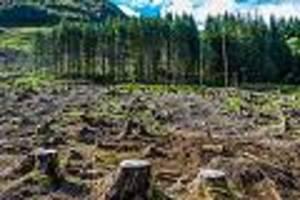 jährlicher bedarf so groß wie wald der niederlande - Ökoschwindel mit strom aus holz: forscher fürchten exzessive waldvernichtung